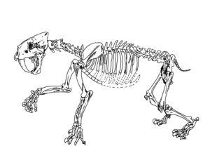 Smilodon illustratioin
