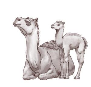 Camelops hesternus illustration